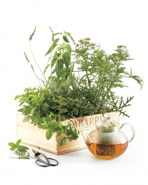 Tea Garden in a box